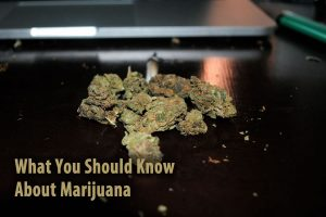 What You Should Know About Marijuana